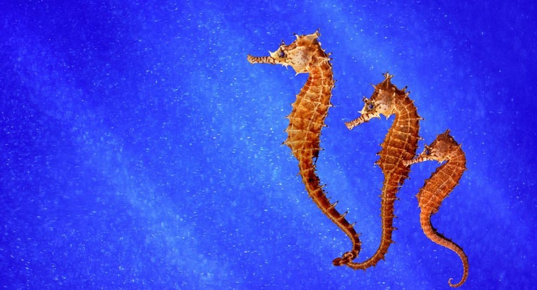 What Foods Do Seahorses Eat?