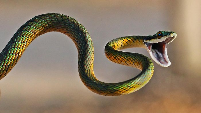 How Do You Identify Snakes?