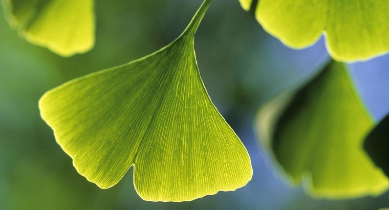What Is Ginkgo?
