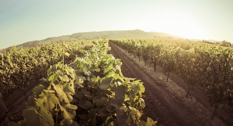 What Are the Most Popular Wineries in Sonoma?