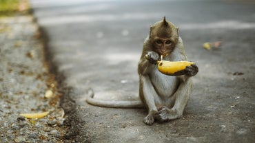 What Are Some Interesting Monkey Facts for Kids?