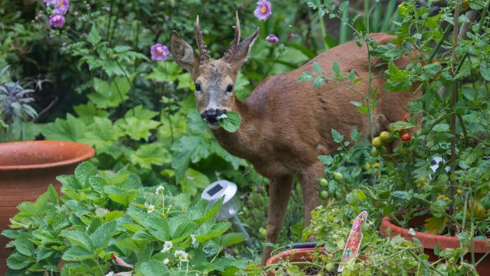Which Varieties of Shrubs Are Resistant to Deer?