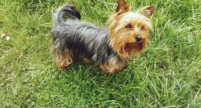 What Are Some Cute Names for a Girl Yorkie Dog?