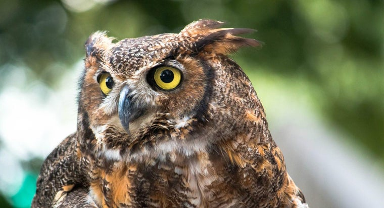 Where Do Great Horned Owls Live?