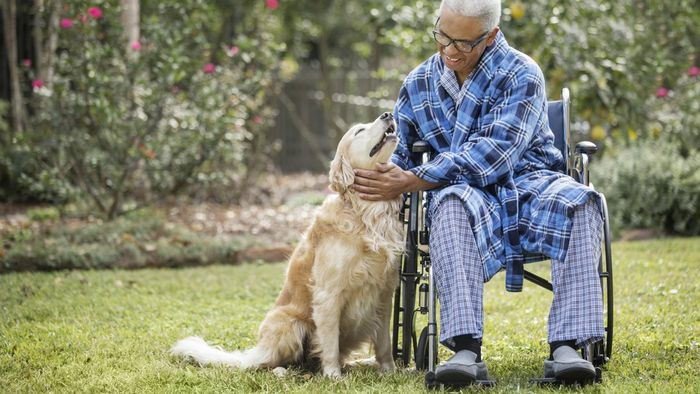 What Should You Include in a Sample Letter Regarding the Services of Therapy Dogs?