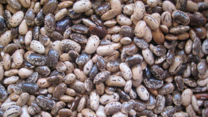 What Are Pinto Beans?