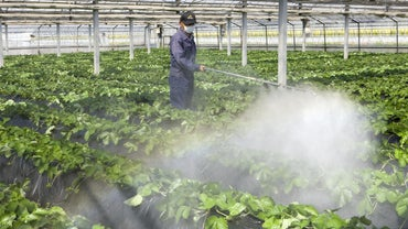 What Are Some Practice Questions for a Pesticide Exam?