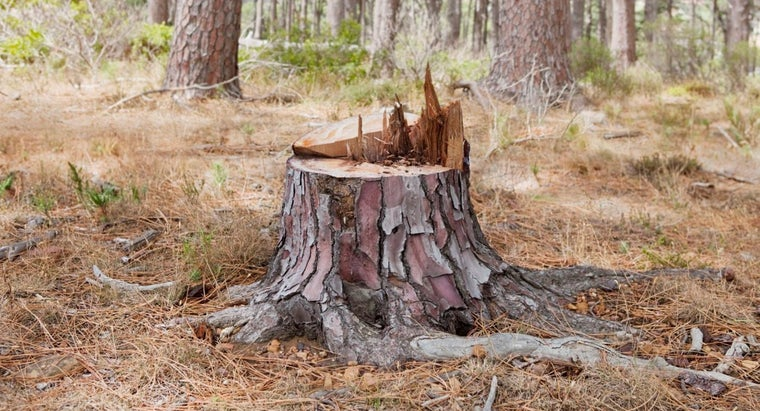 What Is the Best Way to Kill and Remove Tree Stumps?