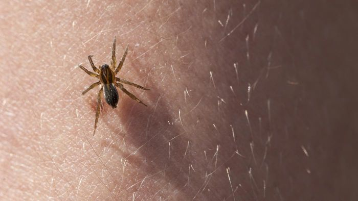 Where can one find photographs of spider bites?