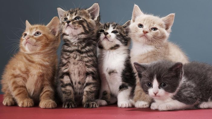 What Are Some of the Top Cat Names?