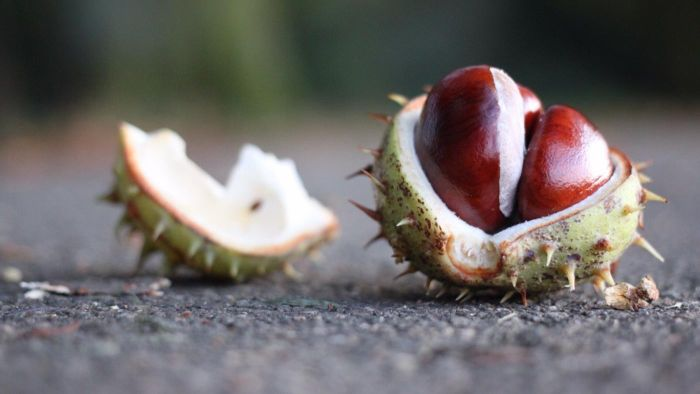 What Are Some Good Recipes Using Fresh Chestnuts?