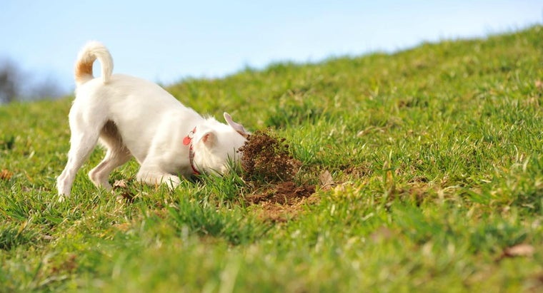 Why Does My Dog Eat Soil?