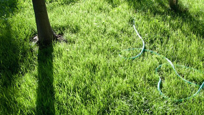 When Is the Best Time to Aerate a Lawn?