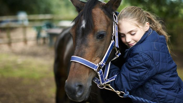 What Are Some Good Equine Therapy Schools?