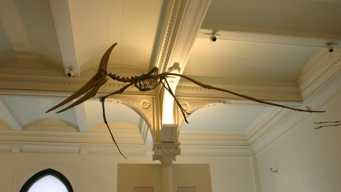 What Are Some Interesting Facts About Pteranodons?