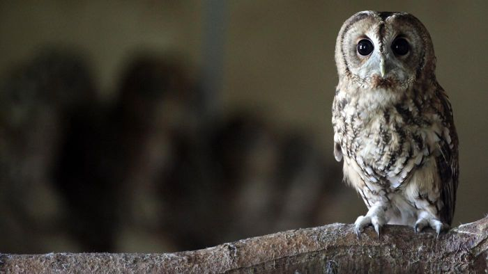 Where Do Owls Generally Live?