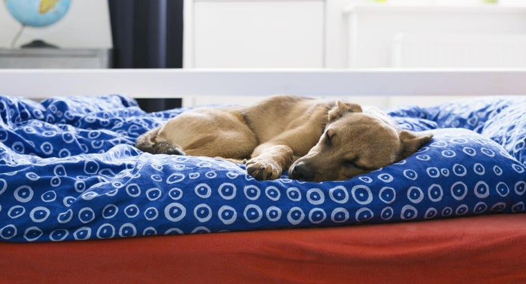 Will Bed Bugs Bite Dogs?