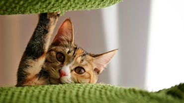 When Should a Cat Be Declawed?