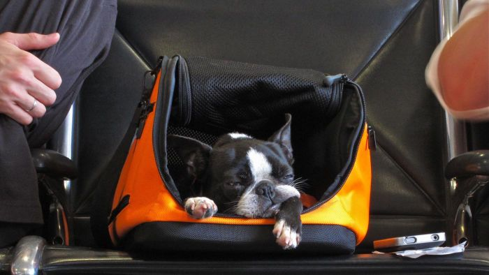 How Do You Ship Your Pet As Cargo on Delta Airlines?