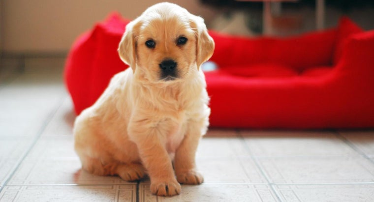 What Were Some Common Puppy Names in 2014?
