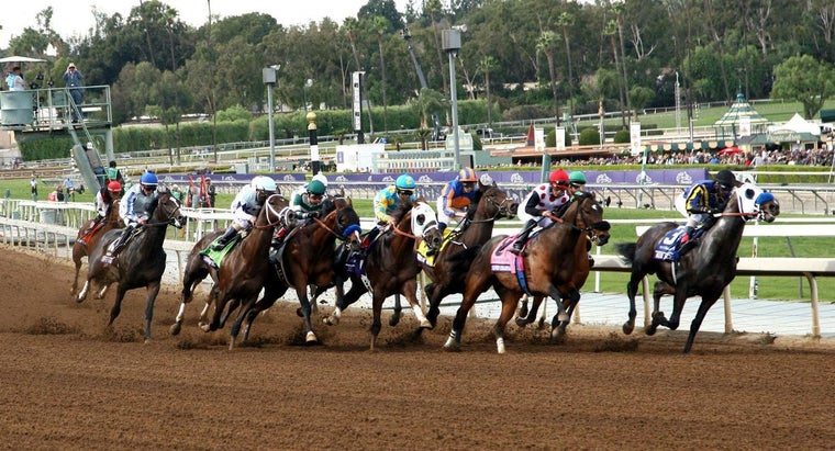 What Are Some Facts About the Breeders' Cup?
