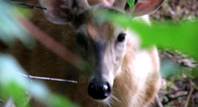 What Is the Purpose of a Live Deer Cam?