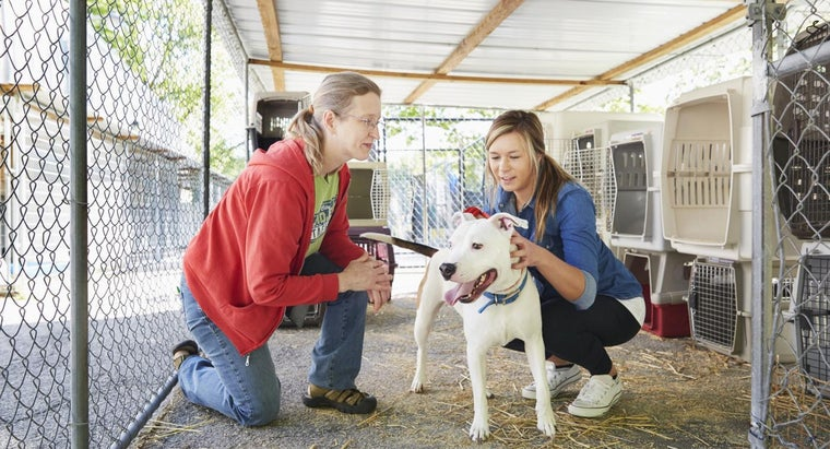 What Are Some Animal Rescue Organizations in Minnesota?