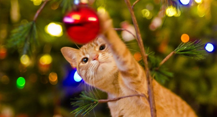 What Holiday Plants Are Harmful to Cats?