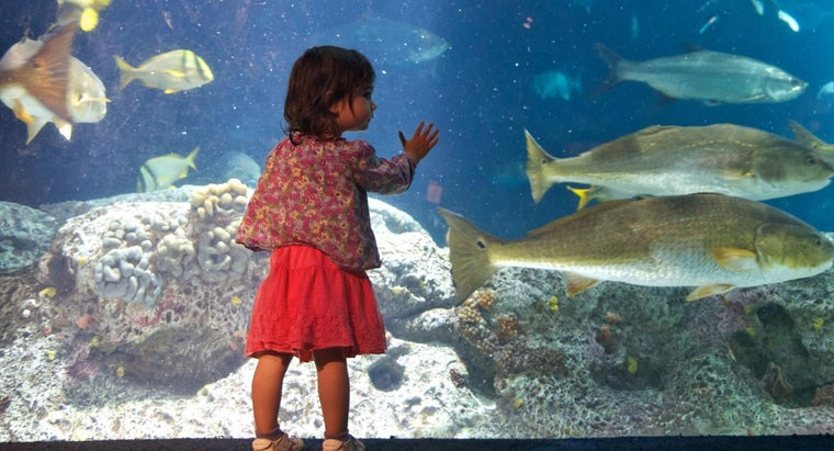 What Are Some Ocean Life Facts for Kids?