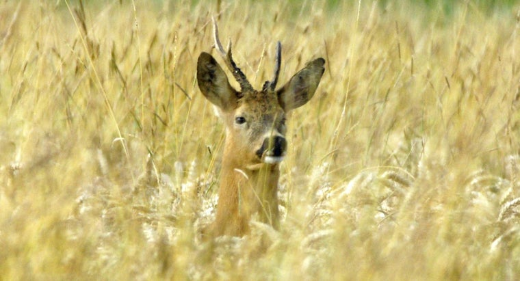 How Much Does a Deer Hunting Land Lease Generally Cost?