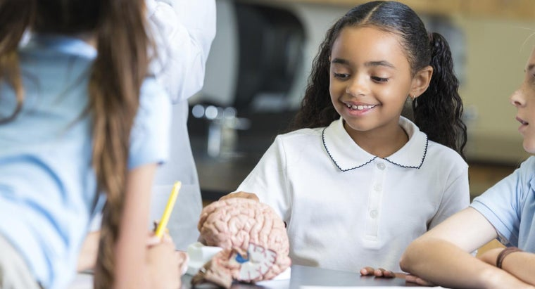 What Are Some Fun Facts About Brains?
