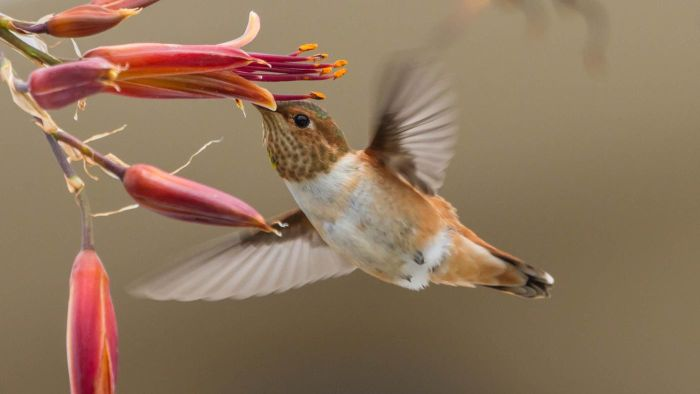What Are Some Basic Facts About Hummingbirds?
