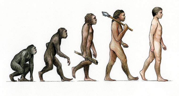 How Do You Get Honest Answers to Questions About Evolution?