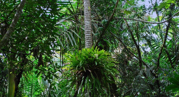 What Are Some Native Rainforest Plants?