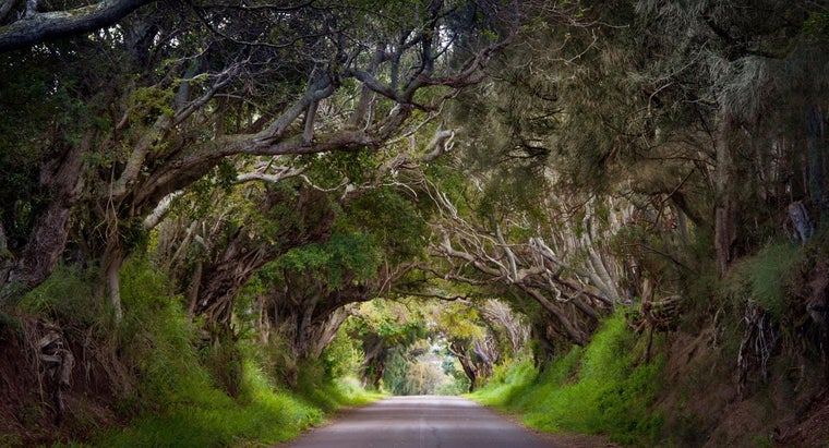 Where Can You Find a Tunnel of Trees?