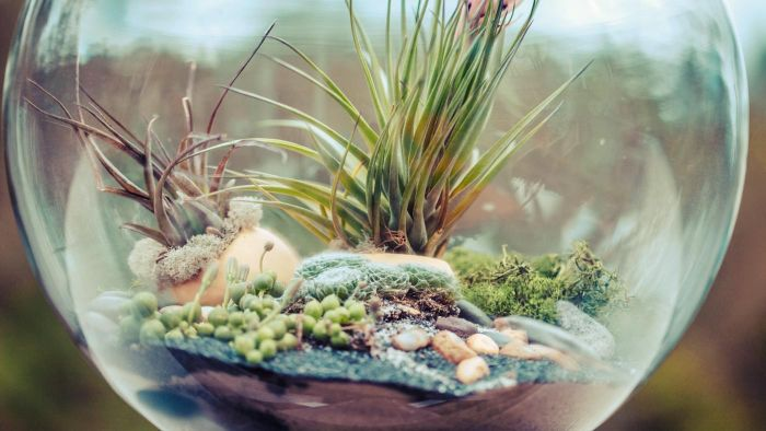 How Do You Plant a Terrarium?