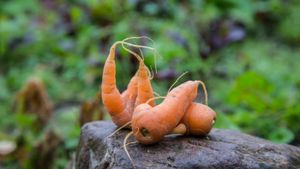 What Is the Ugly Food Movement?