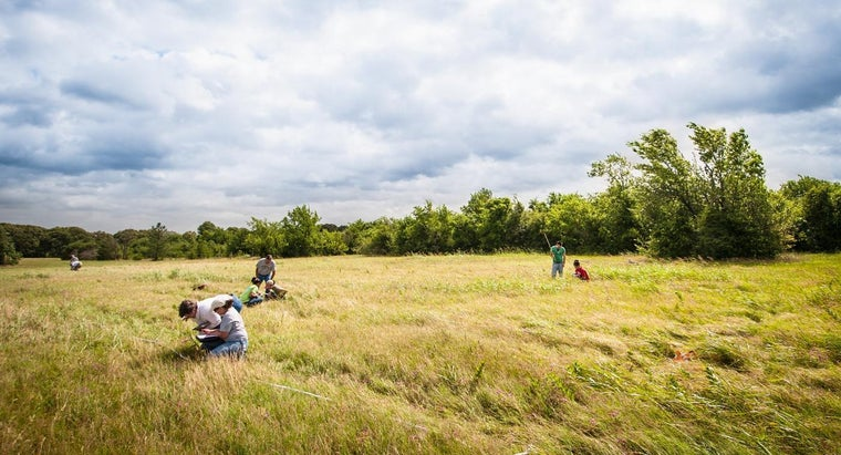 What Are Some Types of Grassland Plants?