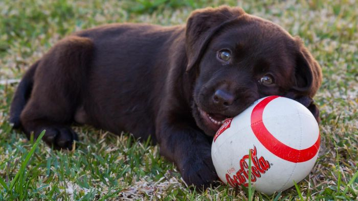 What is a normal blood sugar level for dogs?