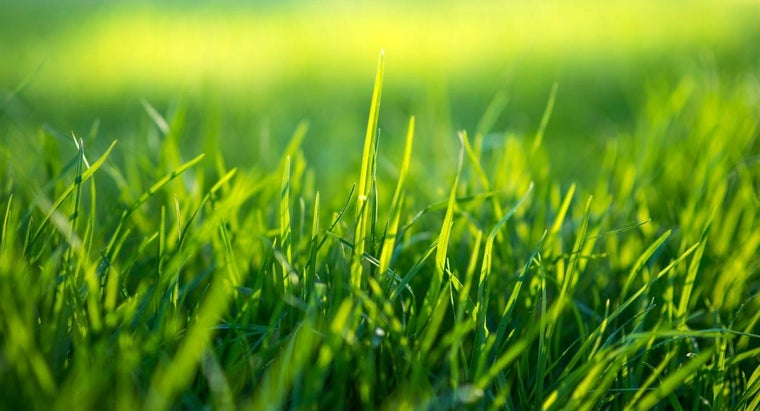 How Do You Know Whether Your Lawn Needs an Application of Lime?