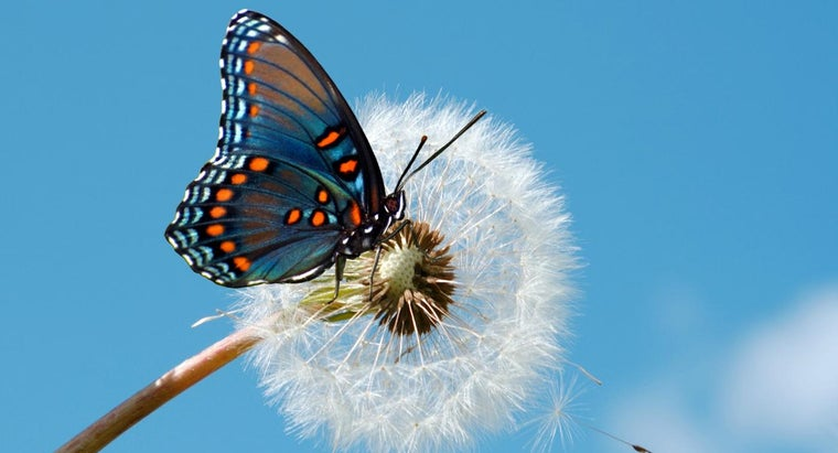 What Are the Different Types of Butterflies?