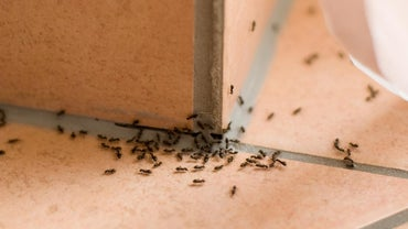 Does Borax Work for Pest Control?