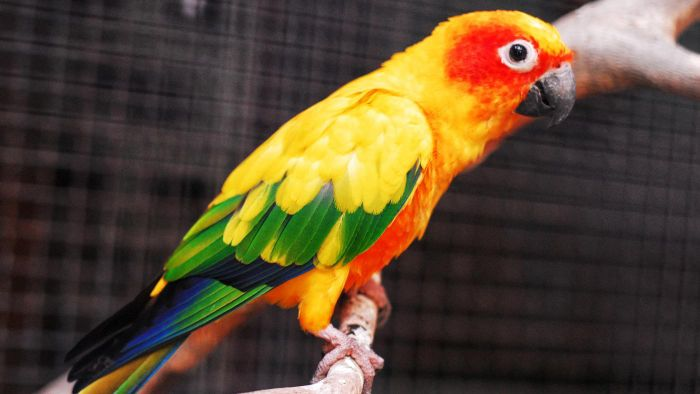 Which organizations have free pet birds for adoption?