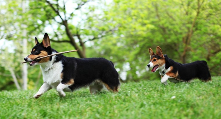 How Long Is the Gestation Period for a Dog?
