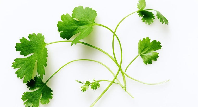 What Are Some Common Uses of Coriander Spice?