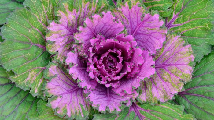 What are some perennials that flower in autumn?