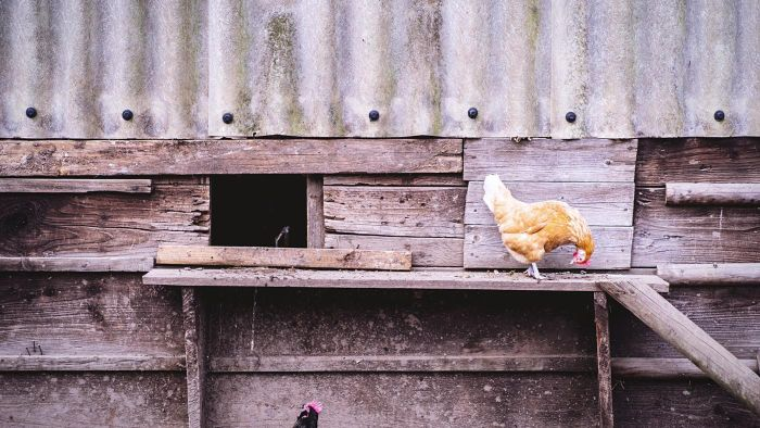 How Do You Build Poultry Houses?
