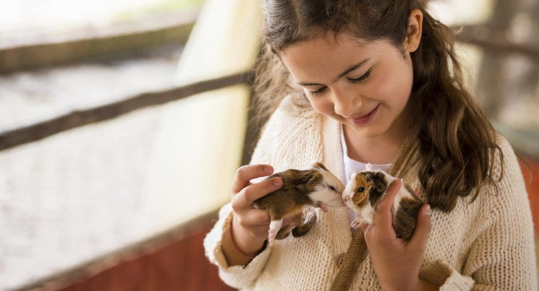 Where Can You Get Free Baby Guinea Pigs?