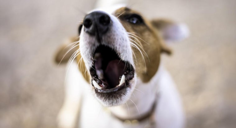 What Are Some Brands of Motion-Activated Dog Barking Detectors?