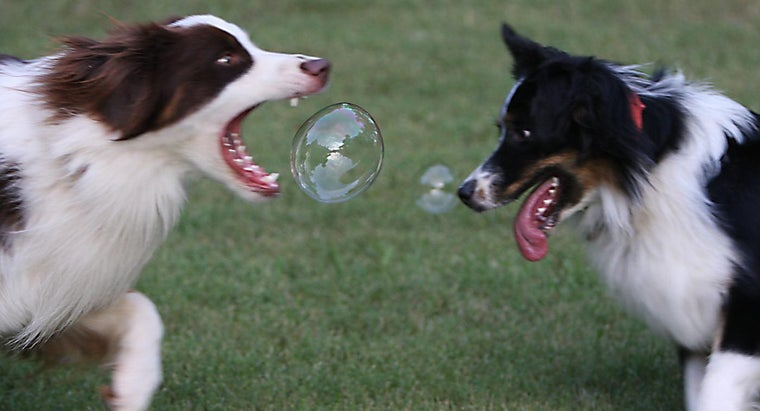 What Are Some Fun Games to Play With a Dog?
